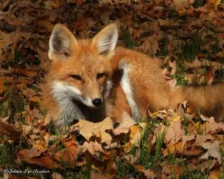 fox-052-copy-copy