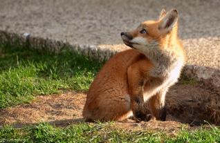 fox-2015-eartiwulandari