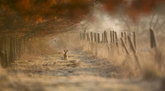 hare-autumn_2007265i