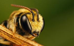 bee-photography