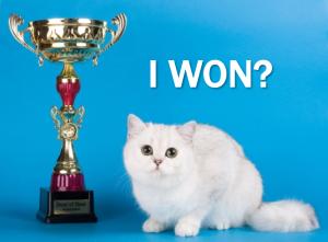 current-event-cat-nobel-winner