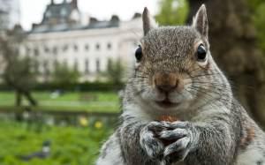 squirrel_2210134k